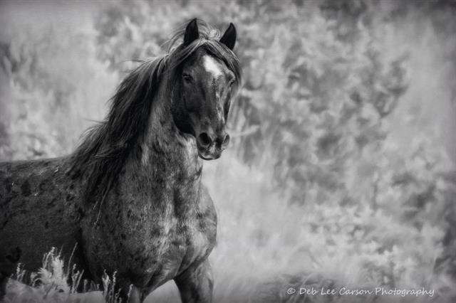Horse Black and White