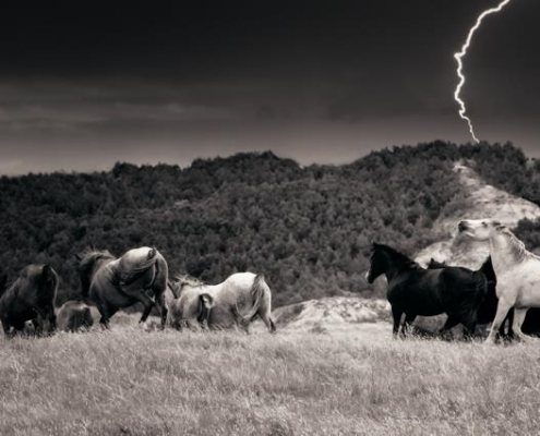 wild horses with lightning