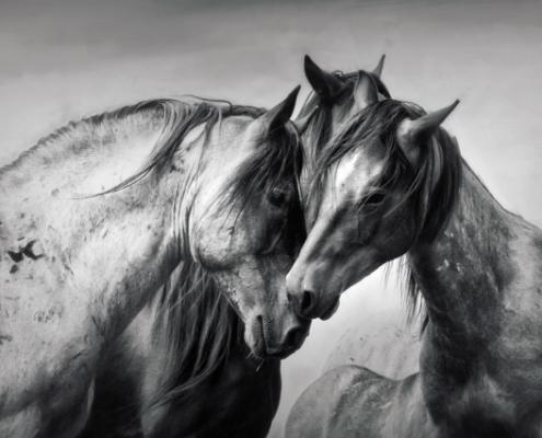 Three Wild Horses