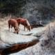 horses drinking